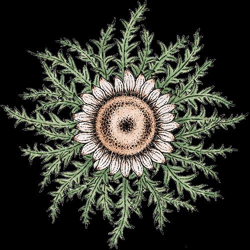 Die Legende von Flor de Sol - Ein Symbol des Bündnisses zwischen Mensch und Natur