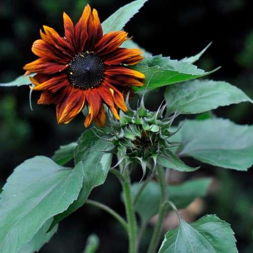 Online-Konsultationen - Sonnenblumen